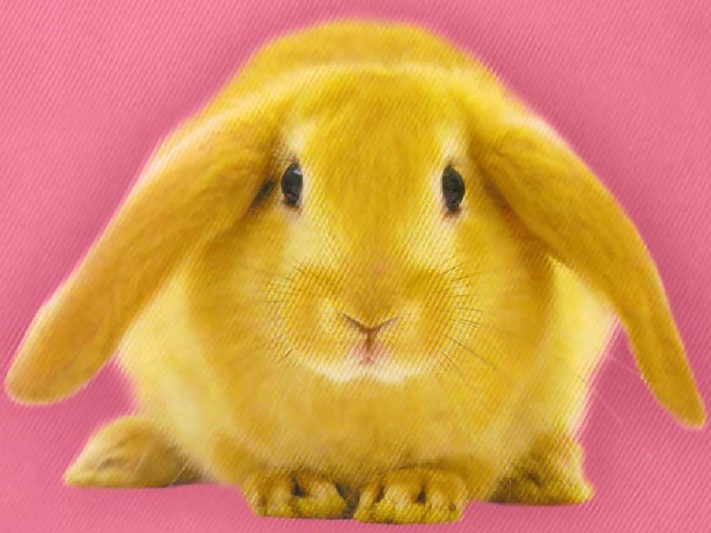 Fiche de morwenna - 4 images 1 mot poussin lapin ...